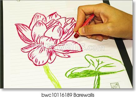 Art print of drawing flowers lotus barewalls posters prints art print of drawing flowers lotus barewalls posters prints bwc10116189 mightylinksfo