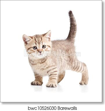 By UK Artist Cat Mounted Print 8 Images To Choose From PEDIGREE CATS