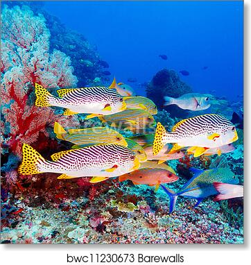 Picture Schools of Colourful Tropical Fish Swimming in the Reef Framed Print