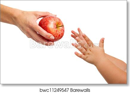 art print of babies hands reaching out to apple barewalls posters