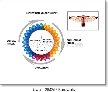 Art Print of Menstrual cycle calendar | Barewalls Posters & Prints ...