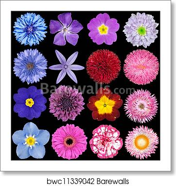 Art Print Of Various Red Pink Blue And Purple Flowers Isolated On Black