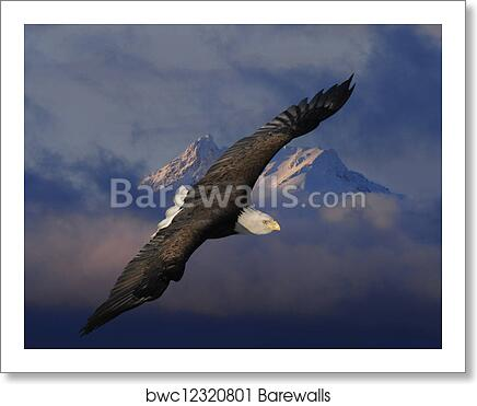 Eagle Soaring Png Perspective