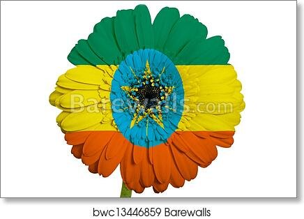 art print of gerbera daisy flower in colors national flag of