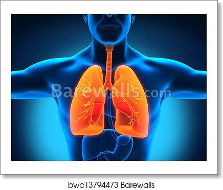 Art Print of Human Respiratory System | Barewalls Posters & Prints ...