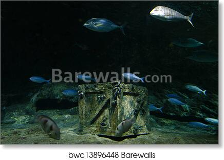 art print of underwater treasure barewalls posters prints