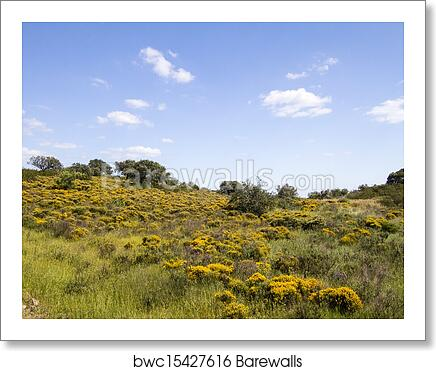Algarve Countryside Hills With Yellow Bushes In Spring Art Print