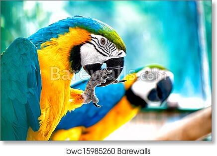VINTAGE PARROTS BLUE YELLOW  MACCAW BIRD AVIARY TROPICAL  CANVAS ART PRINT-BIG