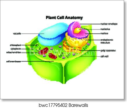 Art Print of Plant cell anatomy | Barewalls Posters & Prints ...