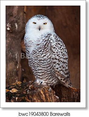 White Owl Sitting On Stump Art Print Barewalls Posters Prints Bwc19043800
