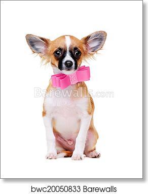 Chihuahua Dog Wearing Pink Bow Tie Art Print Barewalls Posters Prints Bwc20050833