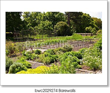 Wondrous Vegetable Garden Art Print Poster Download Free Architecture Designs Jebrpmadebymaigaardcom