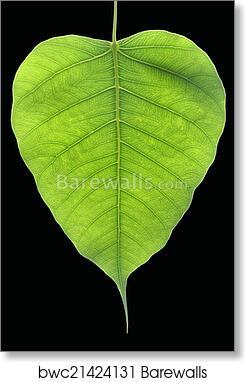 Banyan Tree leaf art print poster