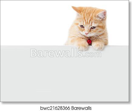 English Picture Long Haired Ginger Tabby Kitten Cat Cats Kittens Art Poster