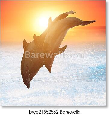 Dolphin Ocean Sunset Fish Wall Picture Art Print