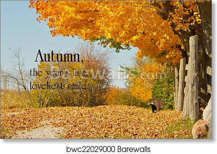 Art Print Of Inspirational Quote On Autumn By William Cullen Bryant On A  Background With A Beautiful Fall Lane With A Little Chocolate Lab Puppy.