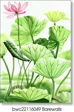 Lotus Flower Watercolor Painting Art Print Barewalls Posters