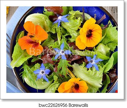 Salad With Edible Flowers Nasturtium Borage Art Print Barewalls Posters Prints Bwc22626956,Lemon Drop Shots Recipe