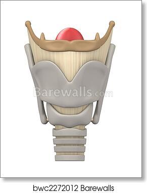greys anatomy larynx