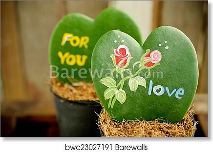 Art Print Of Heart Shaped Plant Kerrii Hoya Barewalls Posters