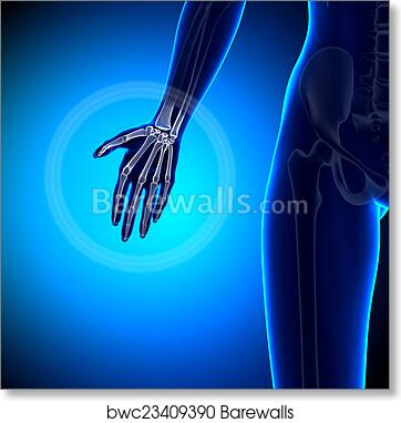 Art Print of Female Hand - Anatomy Bones | Barewalls Posters ...