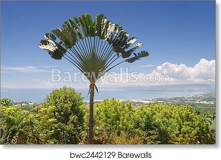 Ravinala palm over tropical bay art print poster