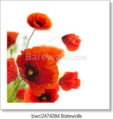 Floral Design Decoration Flowers Poppies Border Corner Art Print Barewalls Posters Prints Bwc2474384