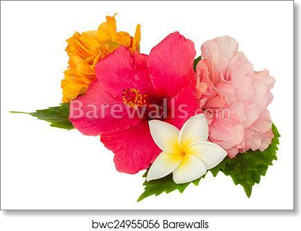 Colorful Hibiscus Flowers Art Print Barewalls Posters Prints