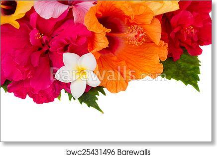 Border Of Colorful Hibiscus Flowers Art Print Barewalls Posters