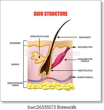 Part 5: The Appropriate Dose (Topical Application)-Anatomy ...