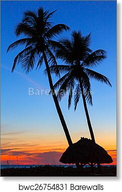 art print of tropical sunset barewalls posters prints bwc26754831