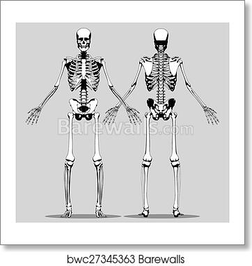 Art print of front and back view of a human skeleton barewalls art print of front and back view of a human skeleton ccuart Image collections