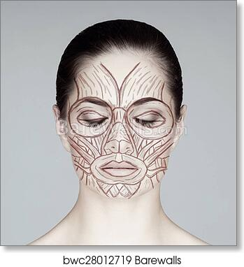 Art Print of Face muscles of a woman. Anatomy view. | Barewalls ...