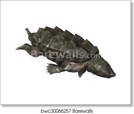 Alligator Snapping Turtle Art Print Barewalls Posters Prints Bwc30066257
