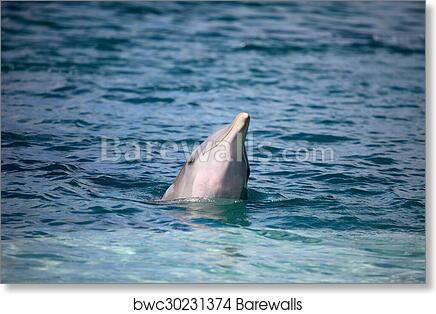 Nature TWO DOLPHINS Glossy 8x10 Photo Ocean Print Wall Art Poster Mammals