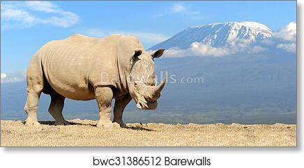 Rhino art print poster