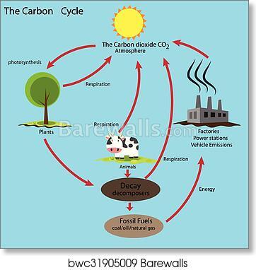 Art Print Of Carbon Cycle Barewalls Posters Prints Bwc31905009
