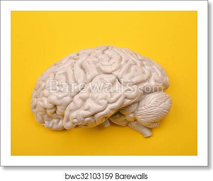 3D human brain model from external on yellow background art print poster