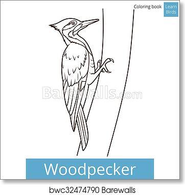 Art Print Of Woodpecker Bird Learn Birds Coloring Book Vector