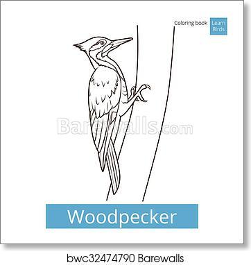 Woodpecker Bird Learn Birds Coloring Book Vector Art Print Barewalls Posters Prints Bwc32474790