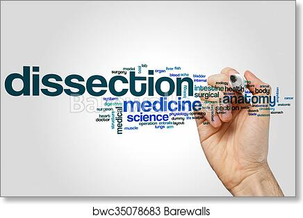 Art Print Of Dissection Word Cloud Barewalls Posters Prints
