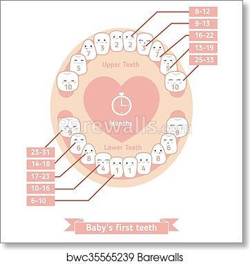 Art print of baby teething chart barewalls posters prints art print of baby teething chart ccuart Image collections