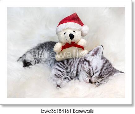 Christmas Bear.Sleeping Young Silver Tabby Cat With Christmas Bear Art Print Poster