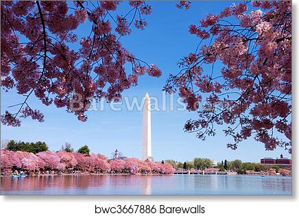 Washington Dc Wall Art washington dc cherry blossom art print/canvas print home decor