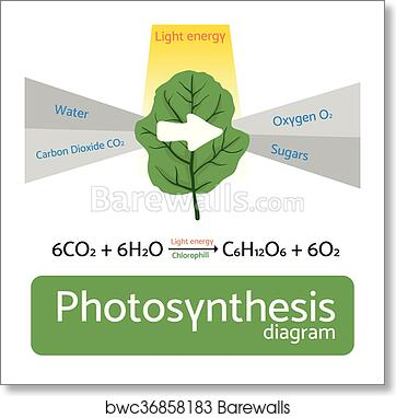 Art print of photosynthesis diagram schematic vector illustration art print of photosynthesis diagram schematic vector illustration of the photosynthetic process ccuart Images