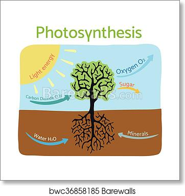 Art print of photosynthesis process diagram schematic vector art print of photosynthesis process diagram schematic vector illustration ccuart Image collections