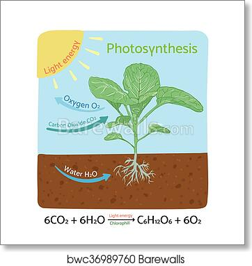Art print of photosynthesis diagram schematic vector illustration art print of photosynthesis diagram schematic vector illustration ccuart Image collections