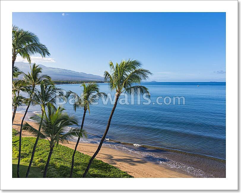 Beach And Palms Trees In The Morning Atsugar Kihei Maui Hawaii Usa