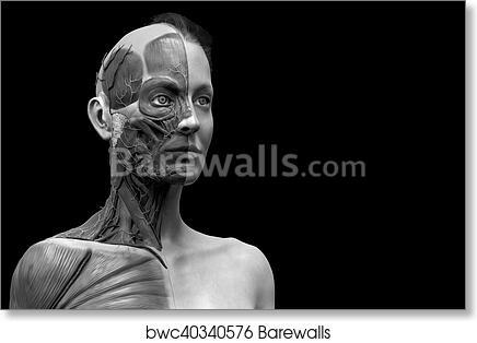 Art Print Of Woman Anatomy Background Barewalls Posters Prints