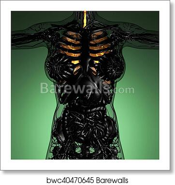 Art Print Of Science Anatomy Of Woman Body With Glow Lungs